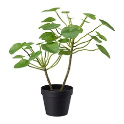 FEJKA artificial potted plant, in/outdoor Pilea
