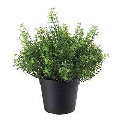 FEJKA artificial potted plant, indoor/outdoor Baby's tears