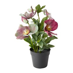 FEJKA artificial potted plant, Christmas rose