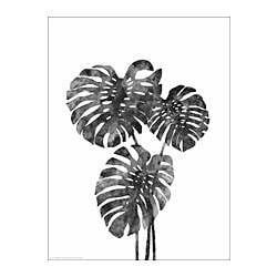 BILD Plakat, Monstera