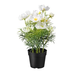 FEJKA artificial potted plant, indoor/outdoor, cosmos white