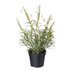FEJKA artificial potted plant, lavender white