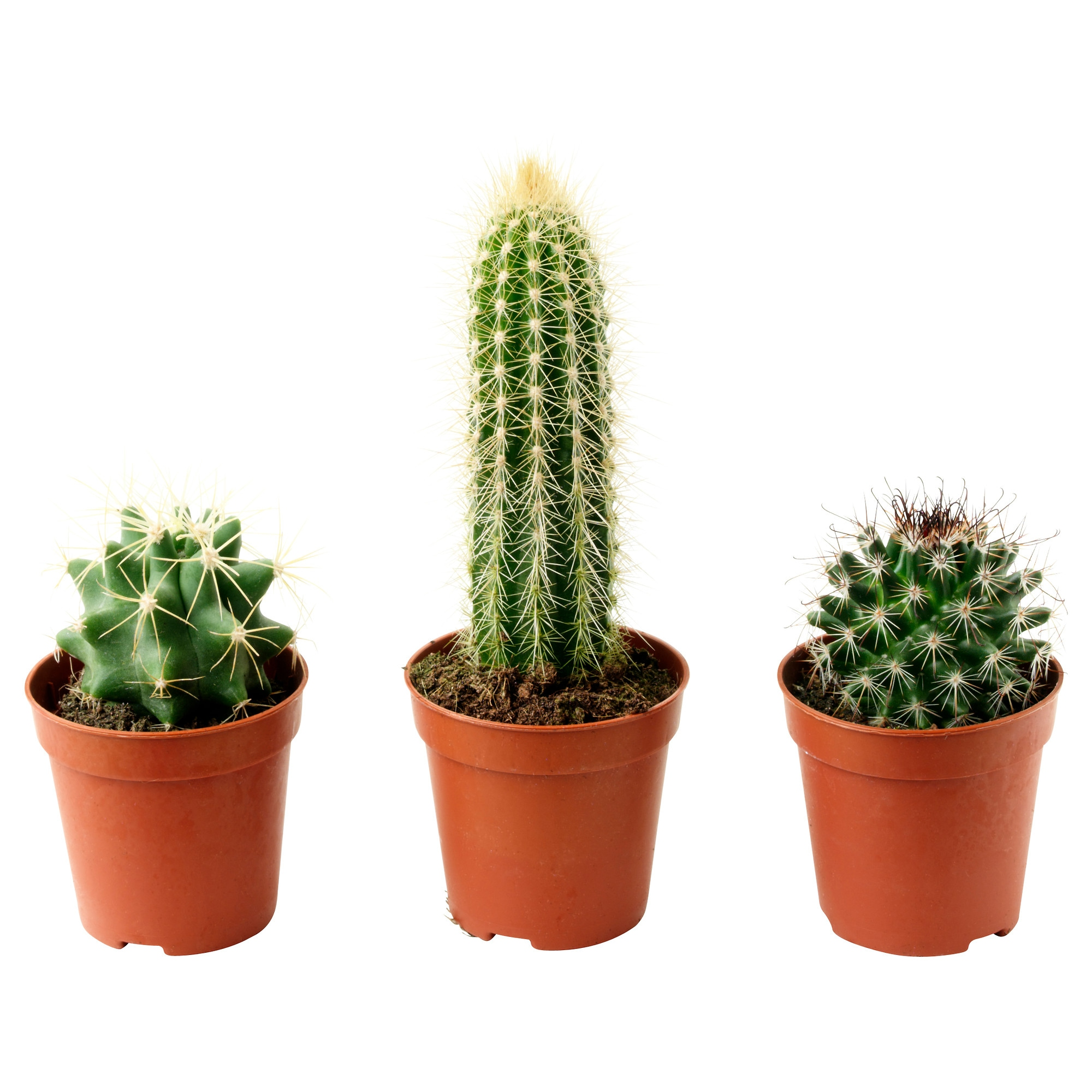 Potted cactus images galleries with a for Faux cactus ikea
