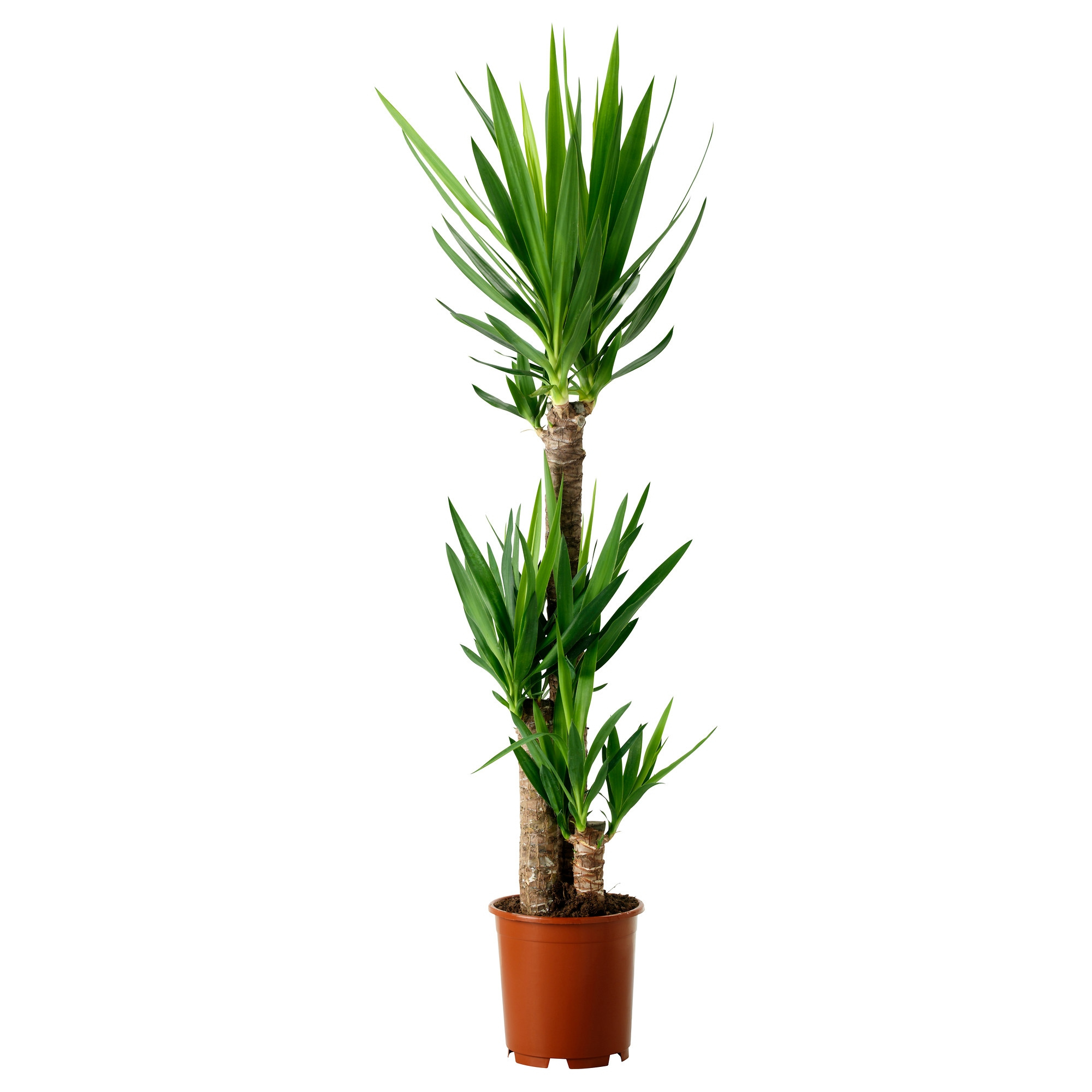 Fascinating 60 tall tropical house plants decorating for Indoor flowers and plants