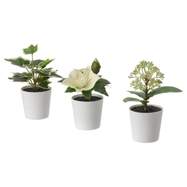 FEJKA نباتات صناعية مع آنية، طقم من 3 قطع, داخلي/خارجي/أخضر/أبيض, 6 سم