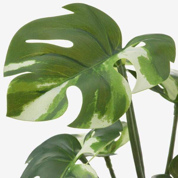 FEJKA نبات صناعي في آنية, داخلي/خارجي مونستيرا, 9 سم