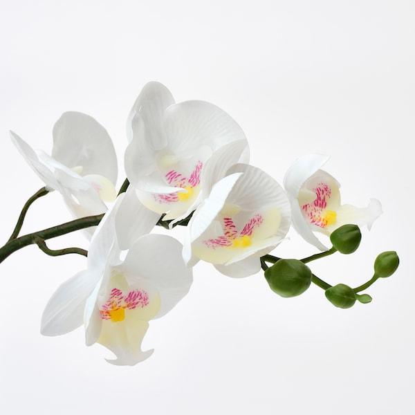 FEJKA نبات صناعي في آنية, أوركيد أبيض, 9 سم