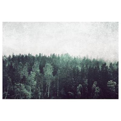BILD Bild, Baumwipfel, 91x61 cm