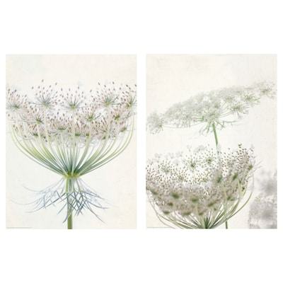BILD Bild, Blumenspitze, 30x40 cm