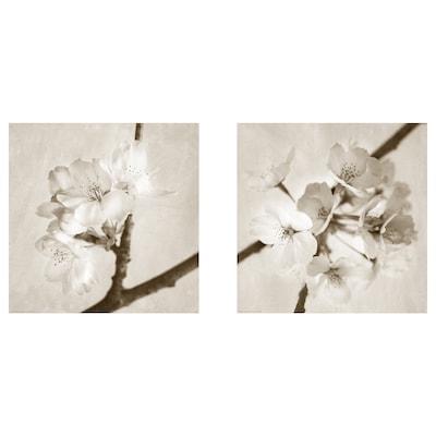 BILD Bild, Flora Maia, 50x50 cm