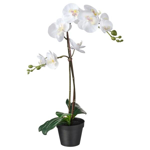 FEJKA Topfpflanze, künstlich, Orchidee weiß, 12 cm