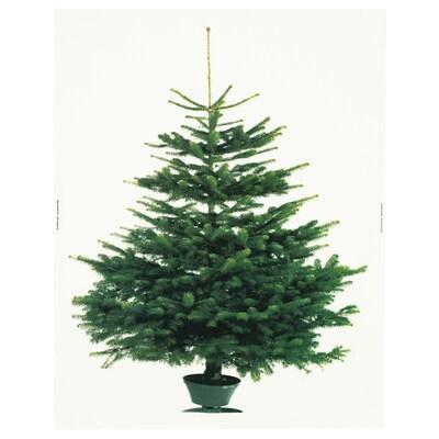 VINTER 2021 Stoffbahn, Weihnachtsbaum weiß/grün, 150x220 cm