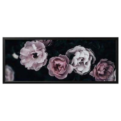 BJÖRKSTA Picture with frame, pink petals/black, 140x56 cm