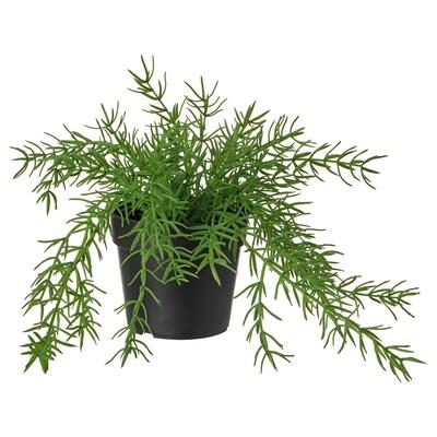FEJKA Artificial potted plant, in/outdoor Mistletoe cactus, 9 cm