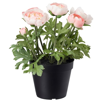 FEJKA Artificial potted plant, in/outdoor/Ranunculus pink, 12 cm