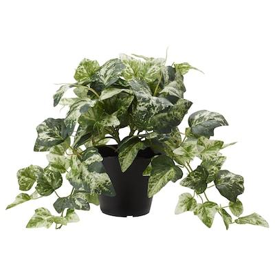 FEJKA Artificial potted plant, Ivy, 12 cm