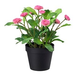 FEJKA artificial potted plant, in/outdoor, Common daisy pink