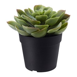FEJKA artificial potted plant, in/outdoor Succulent