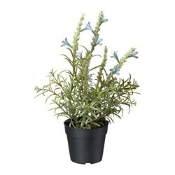 FEJKA artificial potted plant, Lavender blue