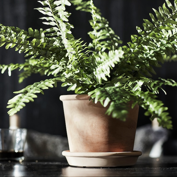 MUSKOTBLOMMA Plant pot with saucer, in/outdoor terracotta, 15 cm