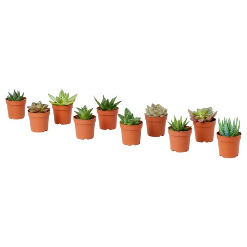 IKEA SUCCULENT Potted plant
