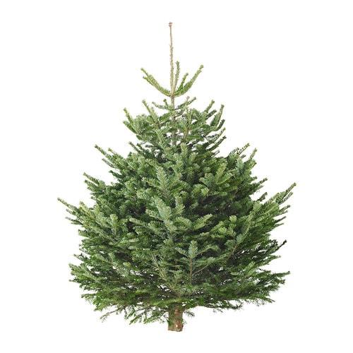 ABIES NORDMANNIANA Sapin de Noël IKEA