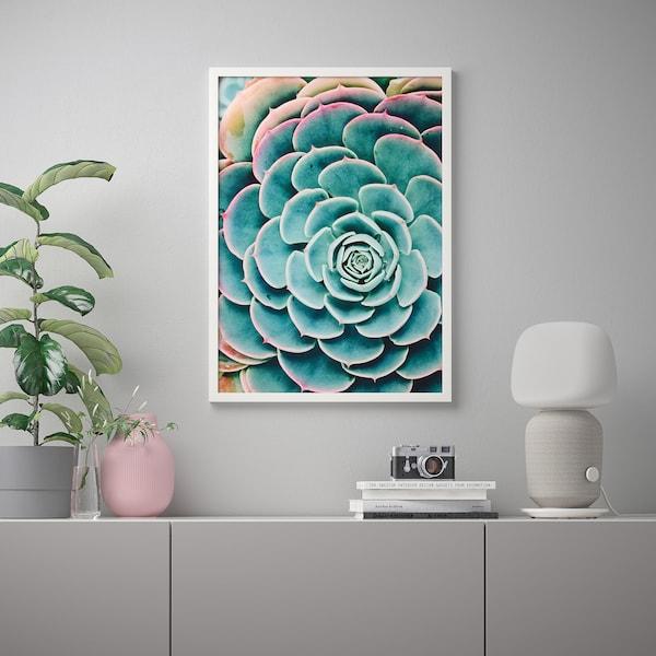 BILD Image, Plante succulente, 50x70 cm