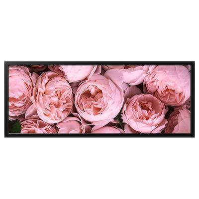 BJÖRKSTA Image avec cadre, Pivoine rose/noir, 140x56 cm
