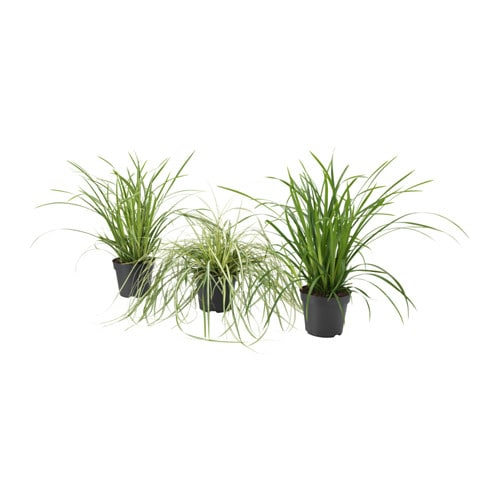 Carex plante en pot ikea for Plantes decoratives jardin