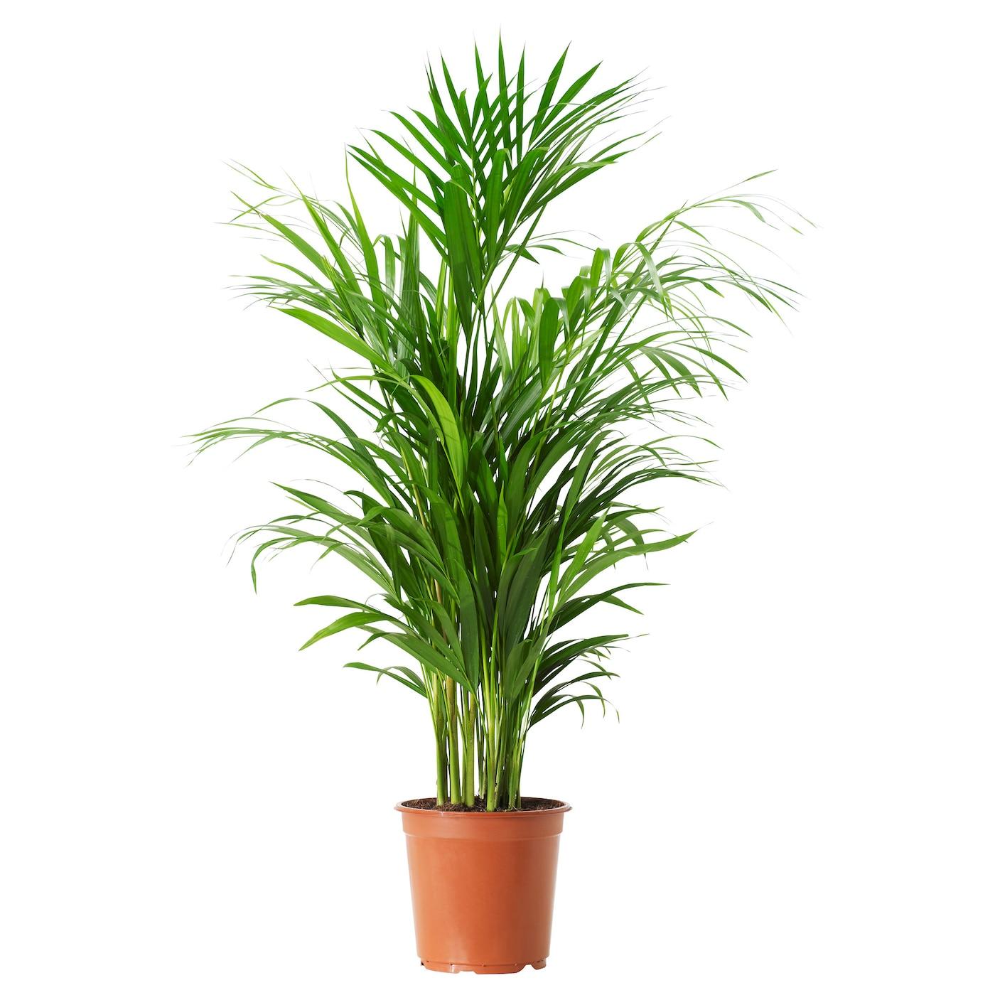 plante interieur ikea