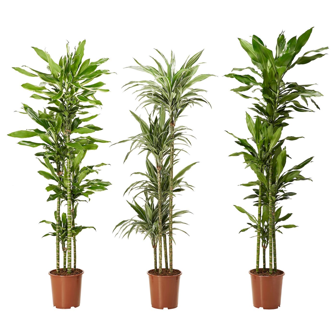 Quelle plante mettre dans un grand pot exterieur free pot for Belle plante exterieur