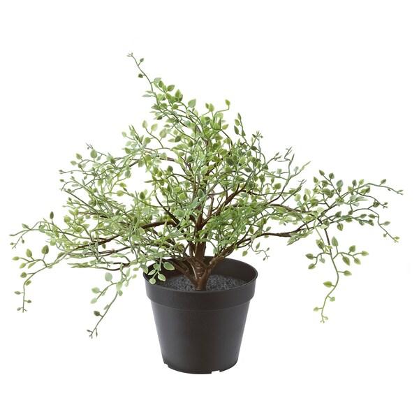 FEJKA plante artificielle en pot intérieur/extérieur Muehlenbeckia 12 cm 31 cm