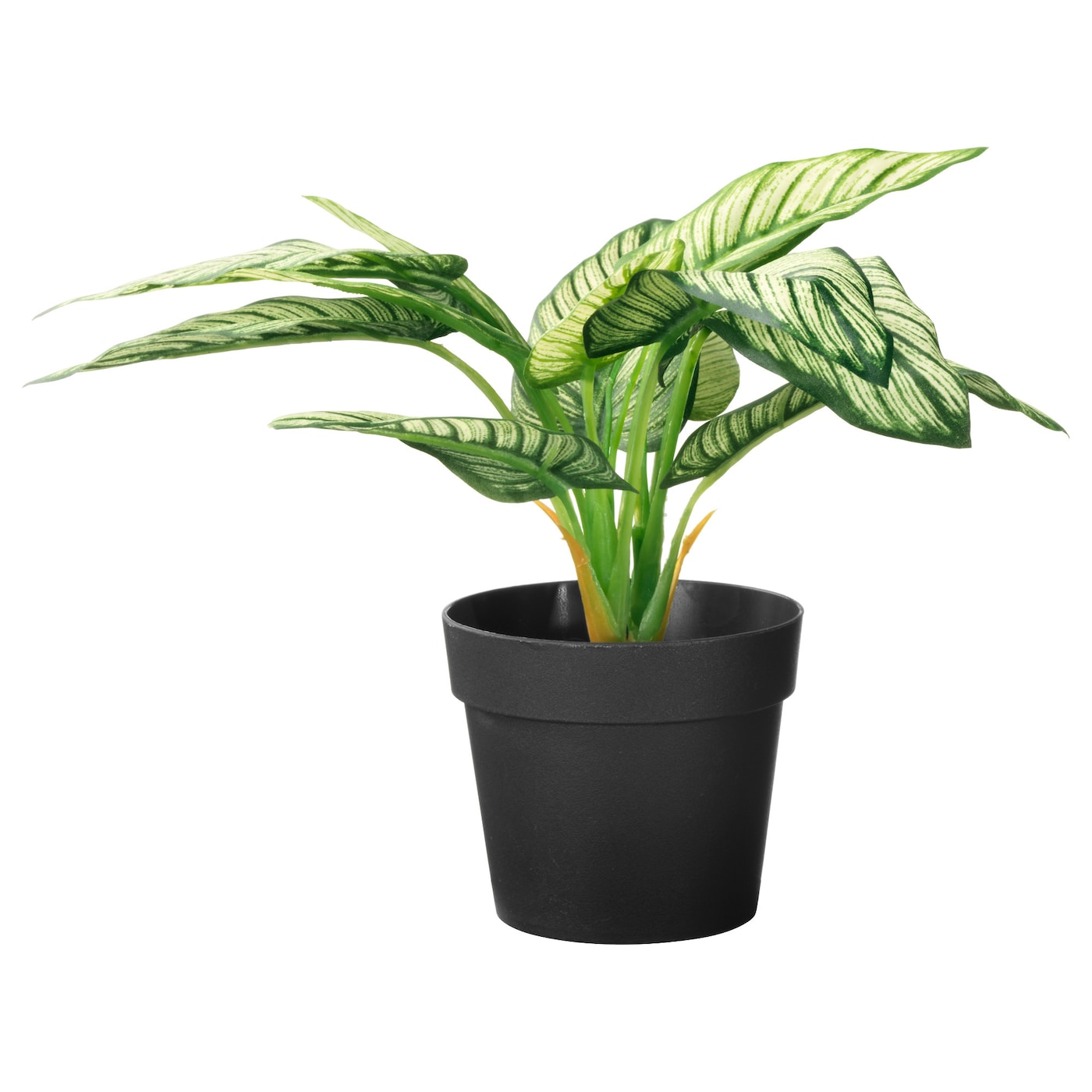 fejka plante artificielle en pot dieffenbachia 9 cm ikea. Black Bedroom Furniture Sets. Home Design Ideas