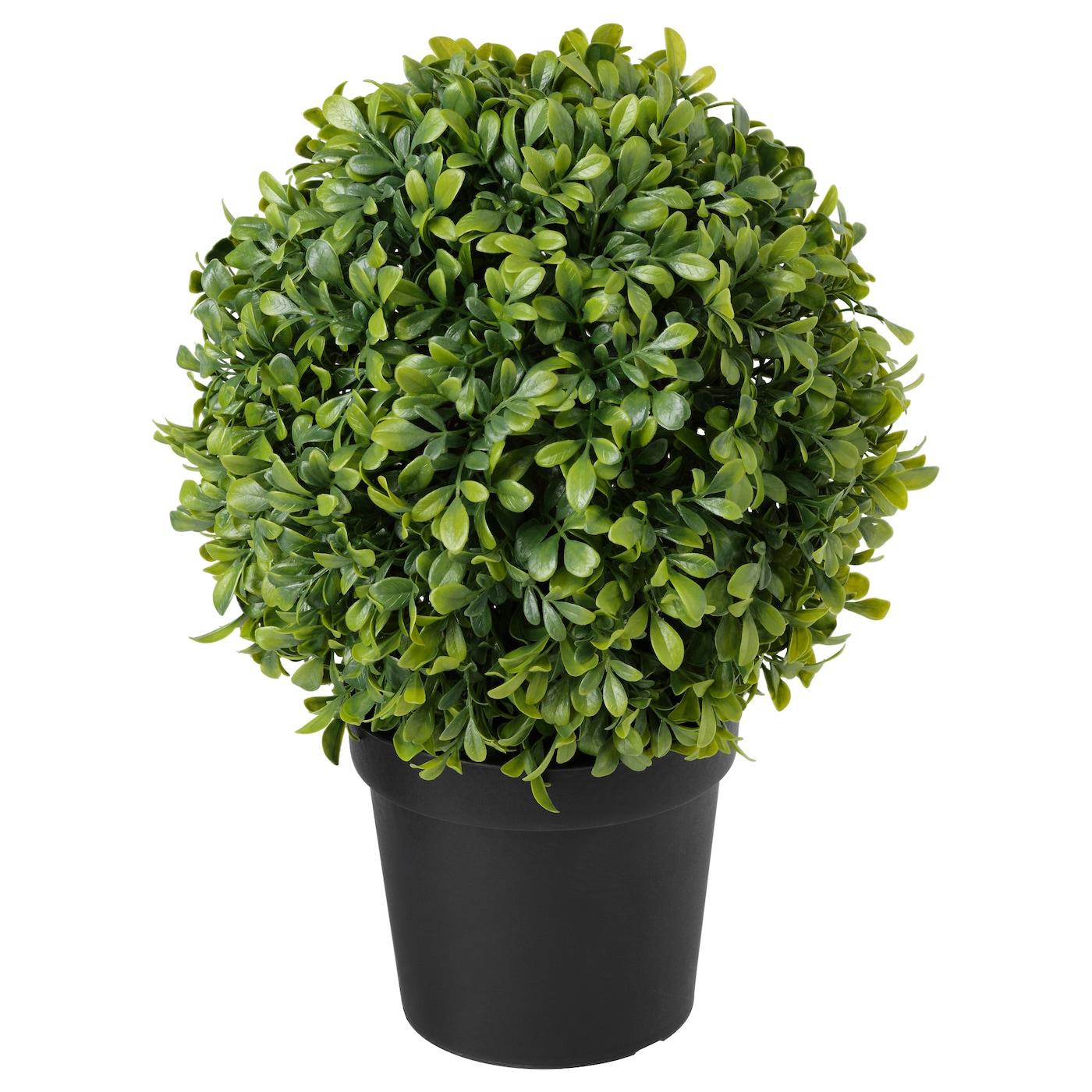 fejka plante artificielle en pot int rieur ext rieur buis forme sph rique 15 cm ikea. Black Bedroom Furniture Sets. Home Design Ideas