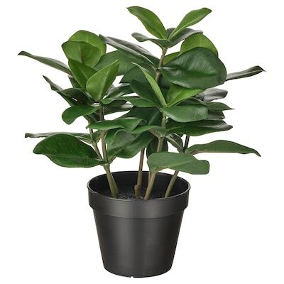 FEJKA Plante artificielle en pot, intérieur/extérieur Clusia, 12 cm