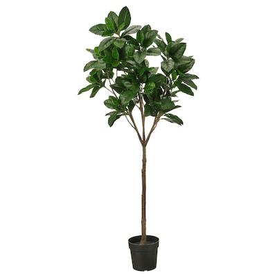 FEJKA Plante artificielle en pot, intérieur/extérieur Magnolia, 23 cm