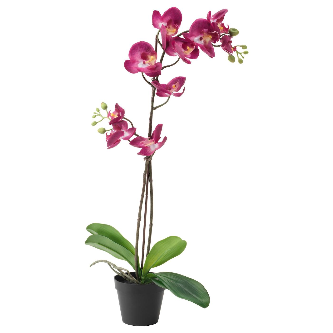 fejka plante artificielle en pot orchid e prune 12 cm ikea. Black Bedroom Furniture Sets. Home Design Ideas