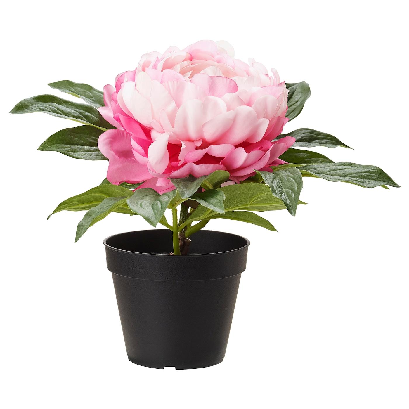 Fejka plante artificielle en pot pivoine rose 12 cm ikea for Plante artificielle ikea pas cher