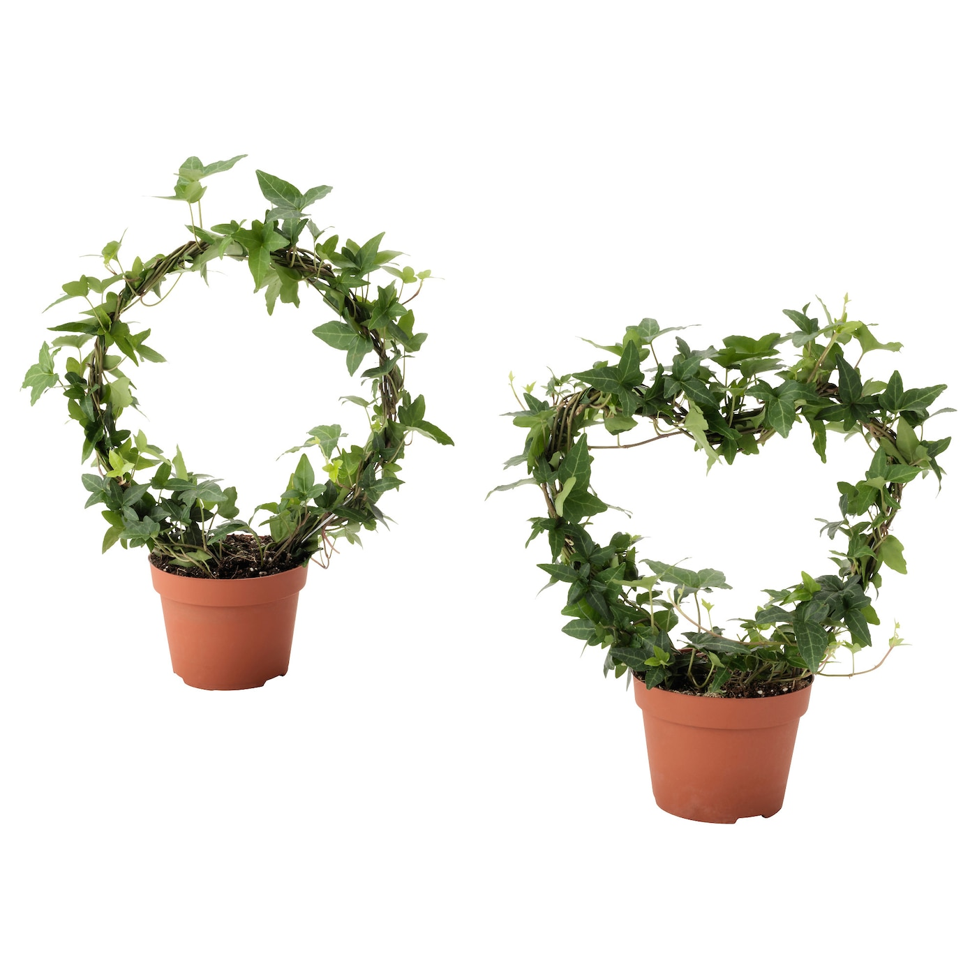 hedera helix plante en pot lierre diverses esp ces 13 cm ikea. Black Bedroom Furniture Sets. Home Design Ideas