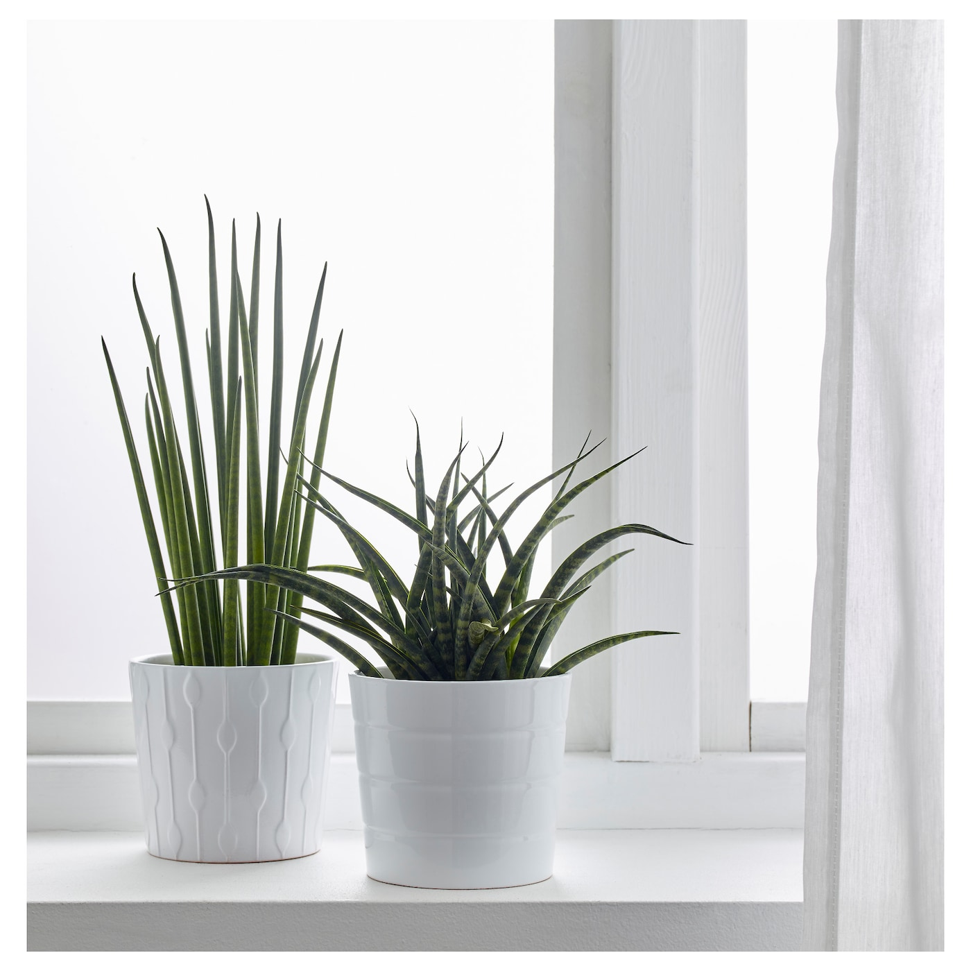 sansevieria plante en pot diverses esp ces 12 cm ikea. Black Bedroom Furniture Sets. Home Design Ideas