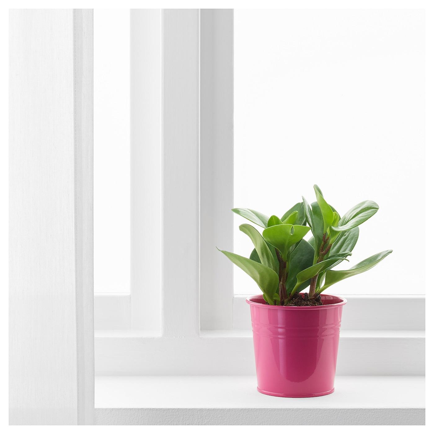 socker cache pot int rieur ext rieur rose 9 cm ikea. Black Bedroom Furniture Sets. Home Design Ideas