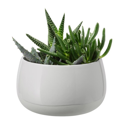 succulent plante avec vase gris 12 cm ikea. Black Bedroom Furniture Sets. Home Design Ideas