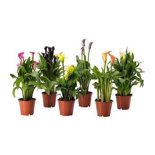 Accueil / décoration et miroirs / cache-pots et plantes / plantes