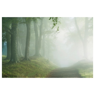 BILD Poster, De weg door het bos, 91x61 cm