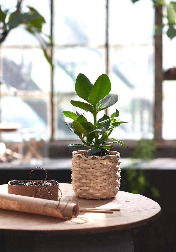 IKEA CLUSIA Potplant