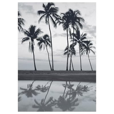 KATEBO Afbeelding zonder lijst, weerspiegelingen palm, 50x70 cm