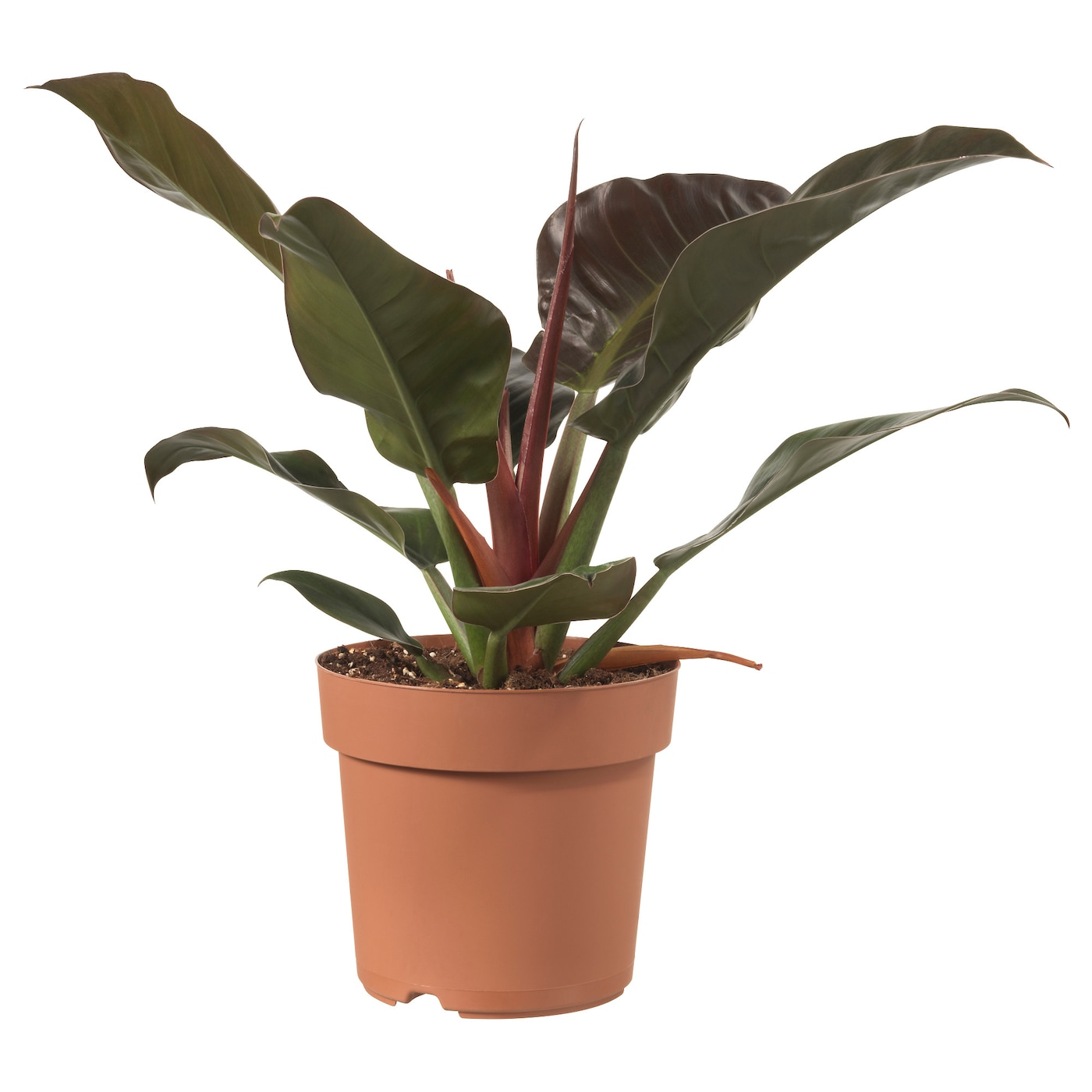 IKEA PHILODENDRON potplant