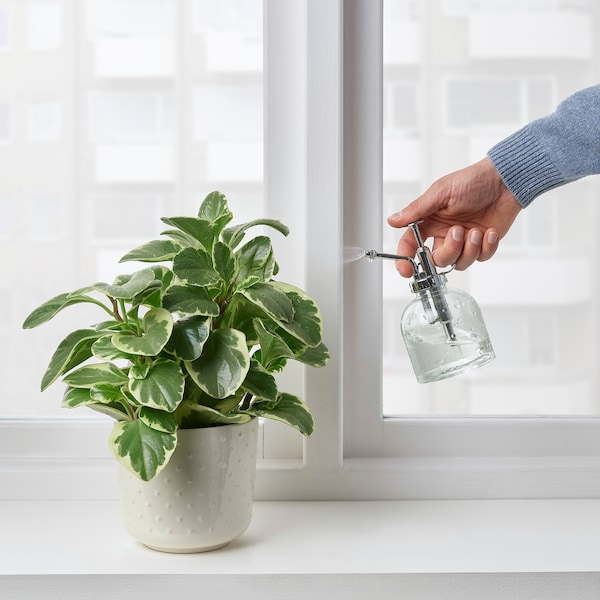 SESAMFRÖN Plantenspuit, helder glas, 25 cl