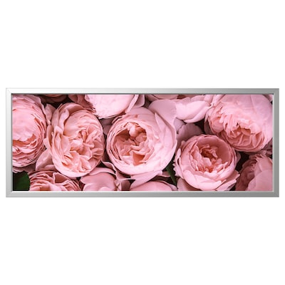 BJÖRKSTA Picture with frame, Pink peony/aluminium-colour, 140x56 cm