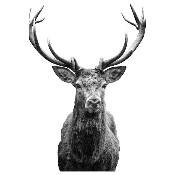 "BJÖRKSTA Picture, Horns, 30 ¾x46 ½ """